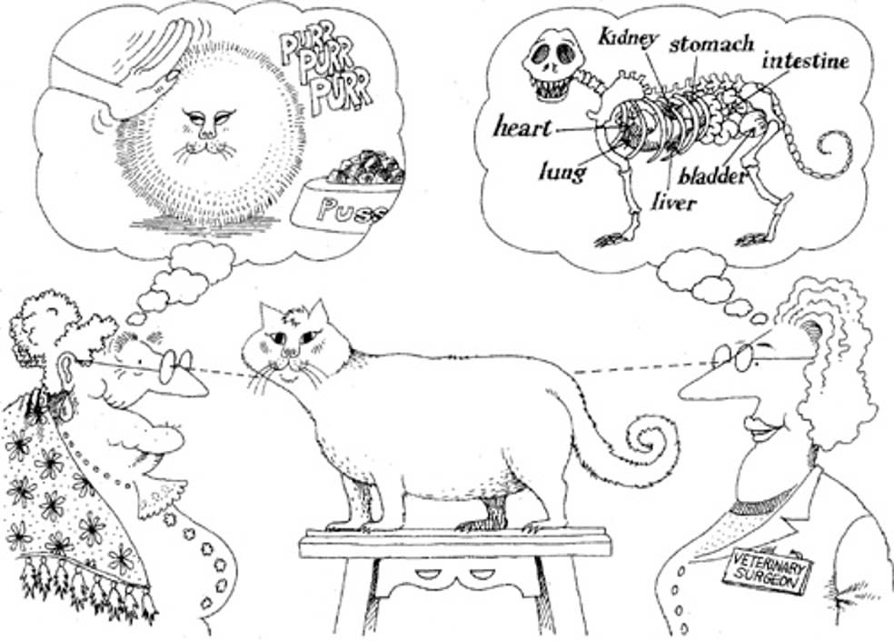 Abstraction explained through different view points of cat by her owner and vet