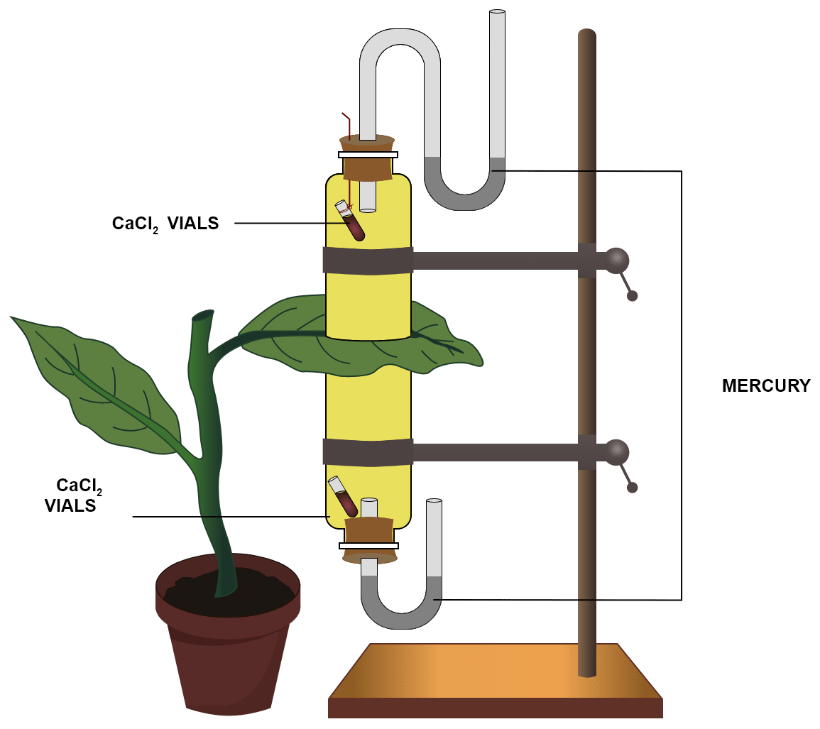 The apparatus shown in the diagram is Garreau's potometer designed to demonstrate unequal transpiration from the two surfaces of a dorsiventral leaf. Equal amounts of calcium chloride (CaCl2) was taken in two vials, which were placed in two cups. The leaf was placed between the cups. The ends of the cups were closed with corks through which two mercury manometers were connected. After few hours, CaCl2 vials were taken out and weighed again. What is the purpose of keeping CaCl2 vials inside the cup? After few hours CaCl2 vials were taken out and weighed again. Will you expect any difference in weight? If so, give reason. What is the purpose of using a manometer? What do you mean by transpiration? Transpiration, Concise Biology Solutions ICSE Class 10.