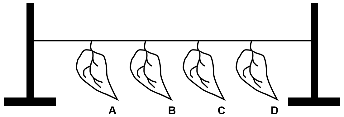 The given figure represents an experiment. Leaf A was coated with grease on both the surfaces. Leaf B was coated with grease on the lower surface. Leaf C was coated with grease on the upper surface. Leaf D was left without any application of grease. All the four leaves A, B, C and D were left in a room for about 24 hours. Which leaf dries first? Give reason. Which leaf dries last? Give reason. Transpiration, Concise Biology Solutions ICSE Class 10.