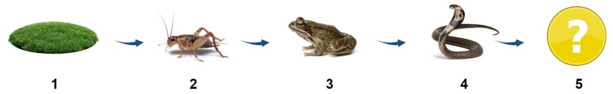 Given below is the representation of a certain phenomenon in nature with four organisms 1-4. Name the phenomenon represented. Name any one organism that could be shown at No. 5. Name the biological process which was the starting point of the whole chain. Name one natural element which all the organisms 2-4 and even 5 are getting from No. 1 for their survival. Photosynthesis, Concise Biology Solutions ICSE Class 10.