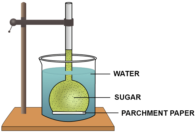 The diagram given below represents an experimental set-up to demonstrate a certain process. Study the same and answer the questions that follow. Name the process. Define the above named process. What would you observe in the experimental set-up after an hour or so? What control experiment can be set up for comparison? Absorption by Roots, Concise Biology Solutions ICSE Class 10