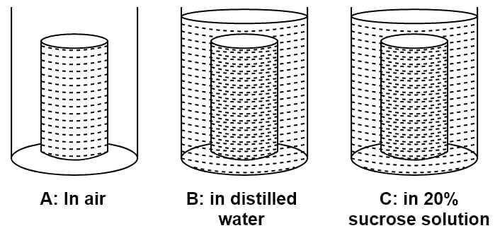 Three cylinders of potato were carefully dried on a blotting paper and weighed. Each piece weighed 3 grams. Each one was placed in the beaker. After 48 hours, which potato cylinder would be the heaviest? The movement of which substance is mainly responsible for the weight change in the potato cylinders? Name and define the process which is responsible for the movement of substance mentioned in answer. Write specific names of the processes which occur in beakers B and C. Would there be any difference in the weight of the potato cylinder in beaker A after 48 hours? Give reason. Absorption by Roots, Concise Biology Solutions ICSE Class 10.