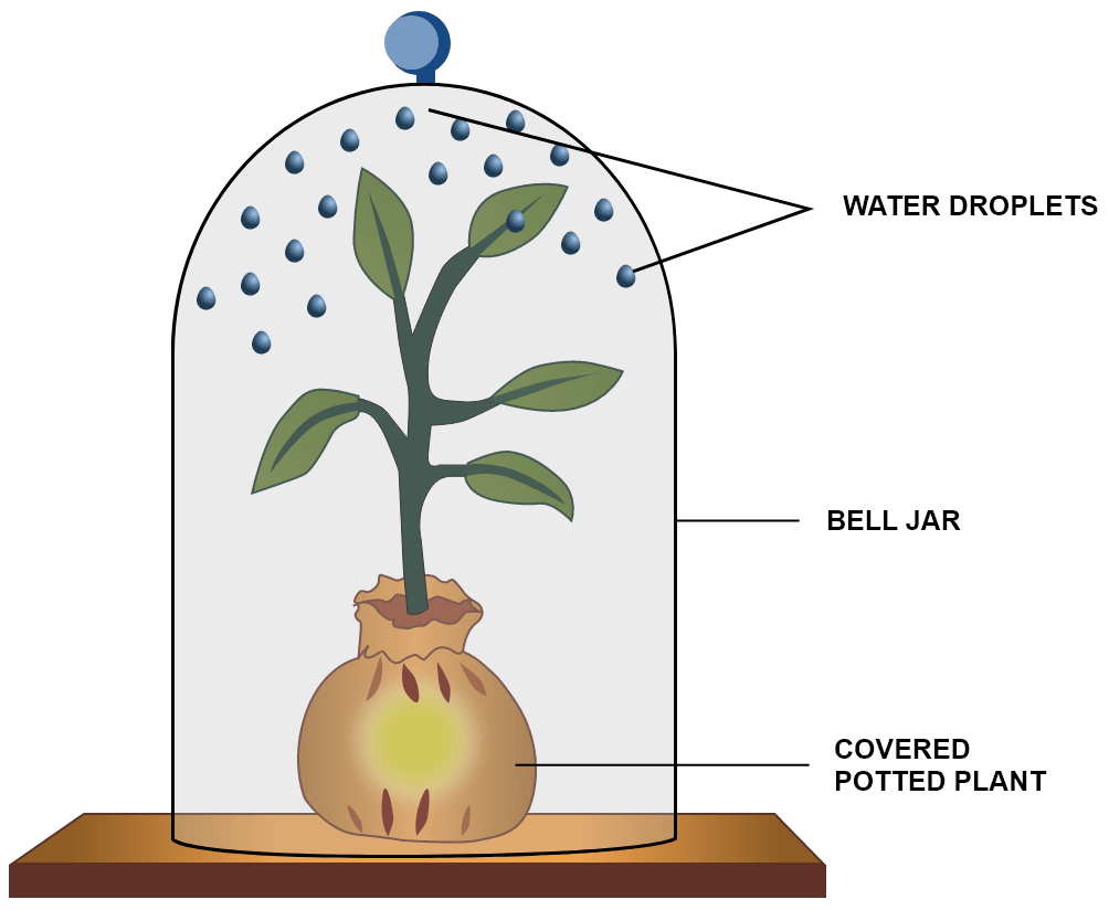 An apparatus as shown was set up to investigate a physiological process in plants. The setup was kept in sunlight for two hours. Droplets of water were then seen inside the bell jar. Name the process being studied. Explain the process. Why was the pot covered with a plastic sheet? Suggest a suitable control for this experiment. Mention two ways in which this process is beneficial to plants. List three adaptations in plants to reduce the above mentioned process. Transpiration, Concise Biology Solutions ICSE Class 10.