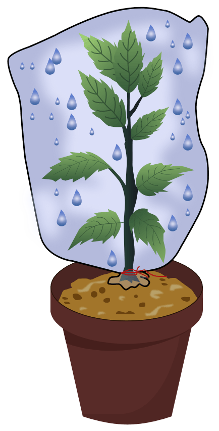 Suppose you have a small rose plant growing in a pot. How would you demonstrate transpiration in it? Transpiration, Concise Biology Solutions ICSE Class 10.