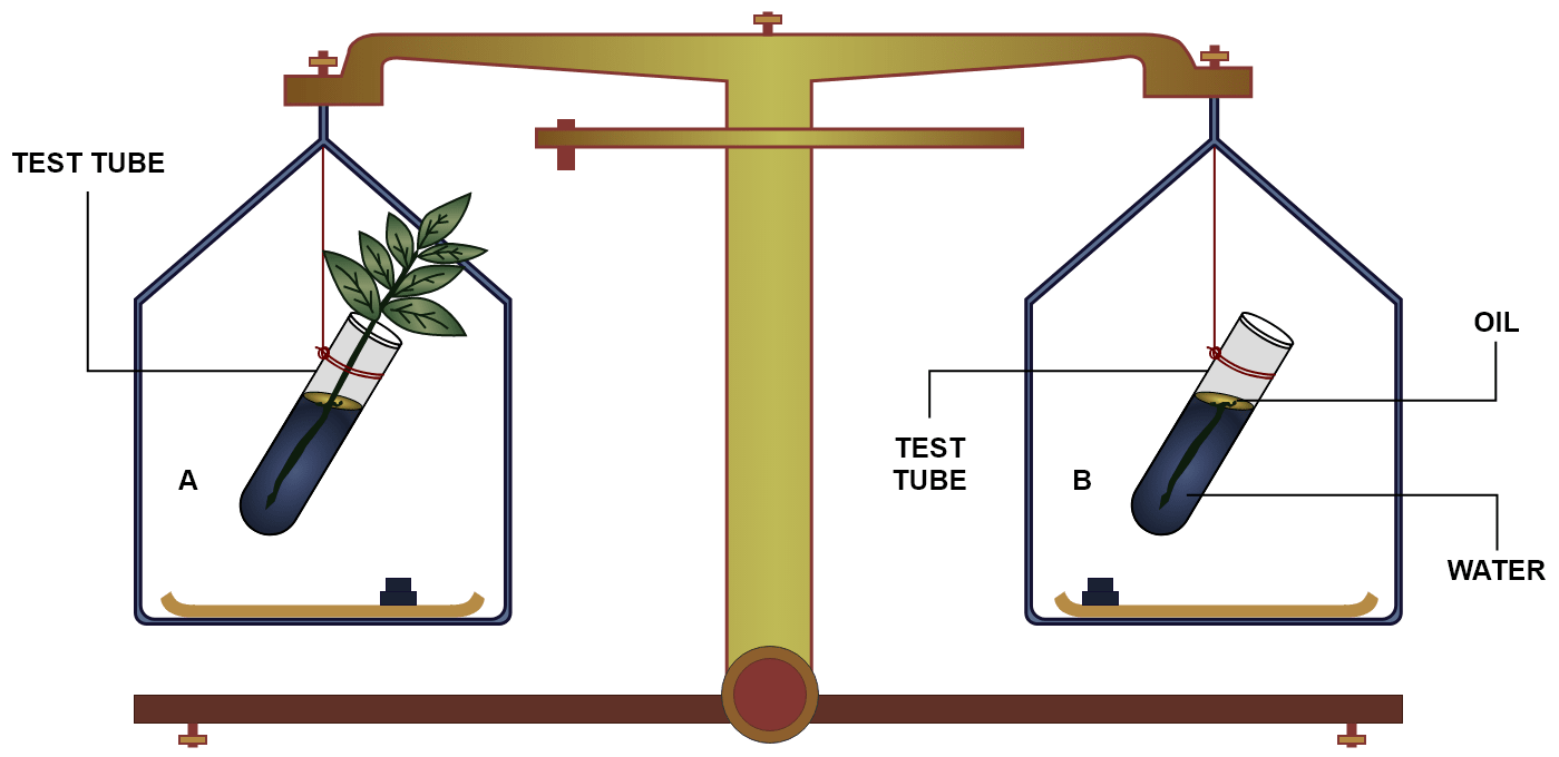 The figure represents an experimental set up with weighing machine to demonstrate a particular process in plants. The experimental set up was placed in bright sunlight. Name the process intended for study. Define the above mentioned process. When the weight of the test tubes A and B is taken before and after the experiment, what change is observed? Justify. What is the purpose of keeping the test tube B in the experimental setup? What is the purpose of putting oil in the test tube? Transpiration, Concise Biology Solutions ICSE Class 10.