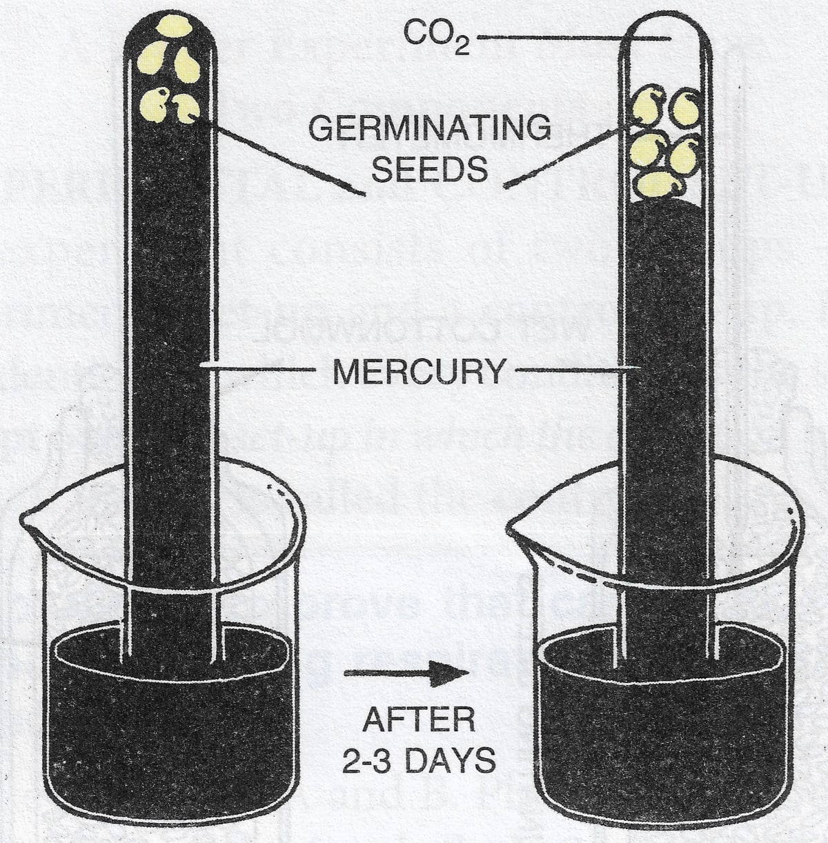 Experiment demonstrating the fact that seed germination undergoes respiration even in complete absence of air. Respiration in Plants, Concise Biology Solutions ICSE Class 9.