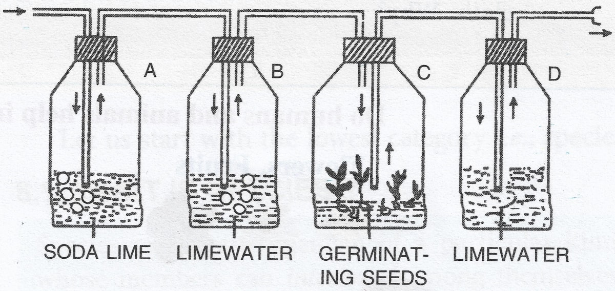 Name the physiological process being studied. What is the function of soda lime in the bottle A and why is limewater placed in bottle B? Respiration in Plants, Concise Biology Solutions ICSE Class 9.