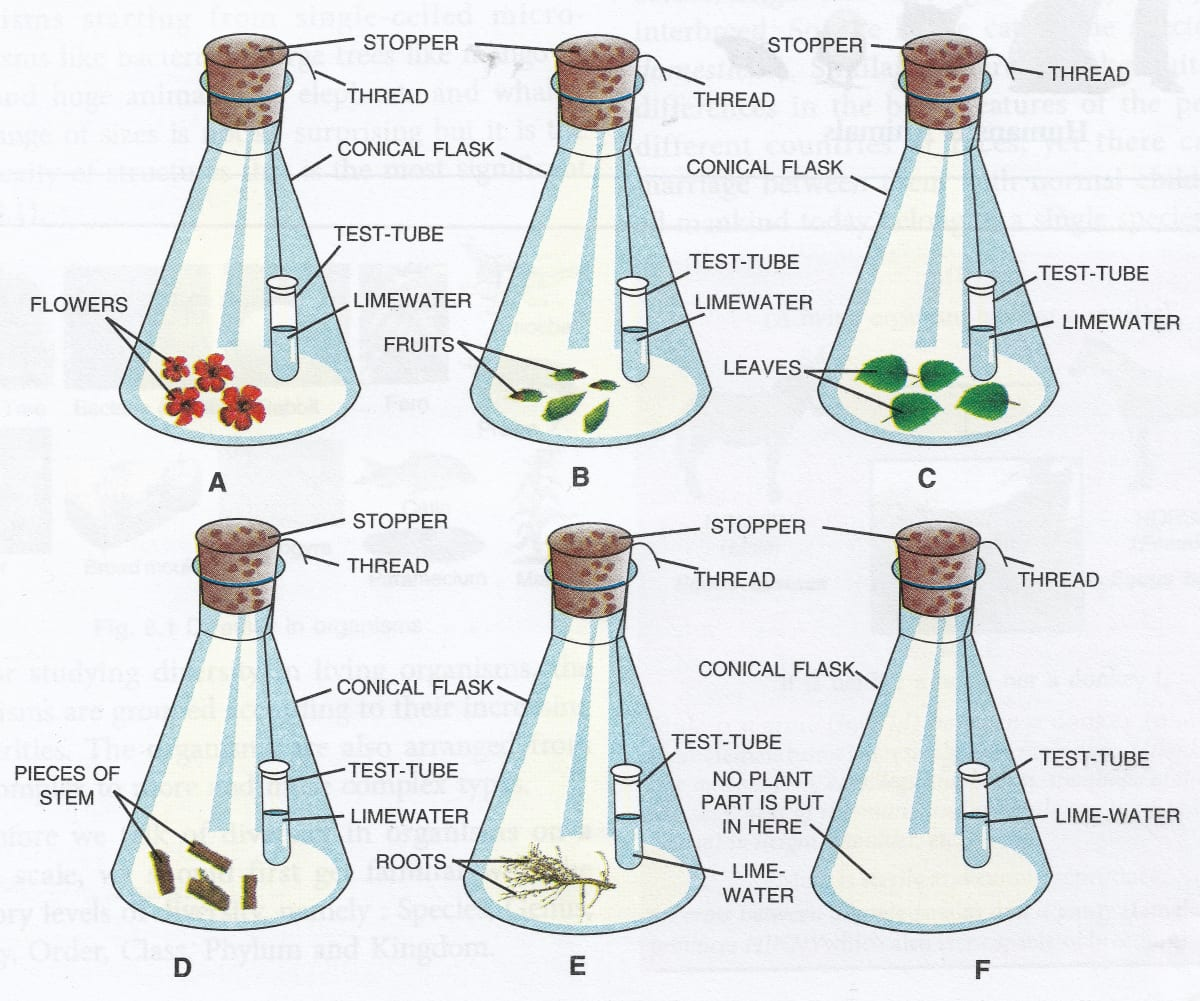 In how many flasks, the different plant parts have been kept under observation? What is the purpose of keeping a test-tube containing limewater in each flask? Respiration in Plants, Concise Biology Solutions ICSE Class 9.