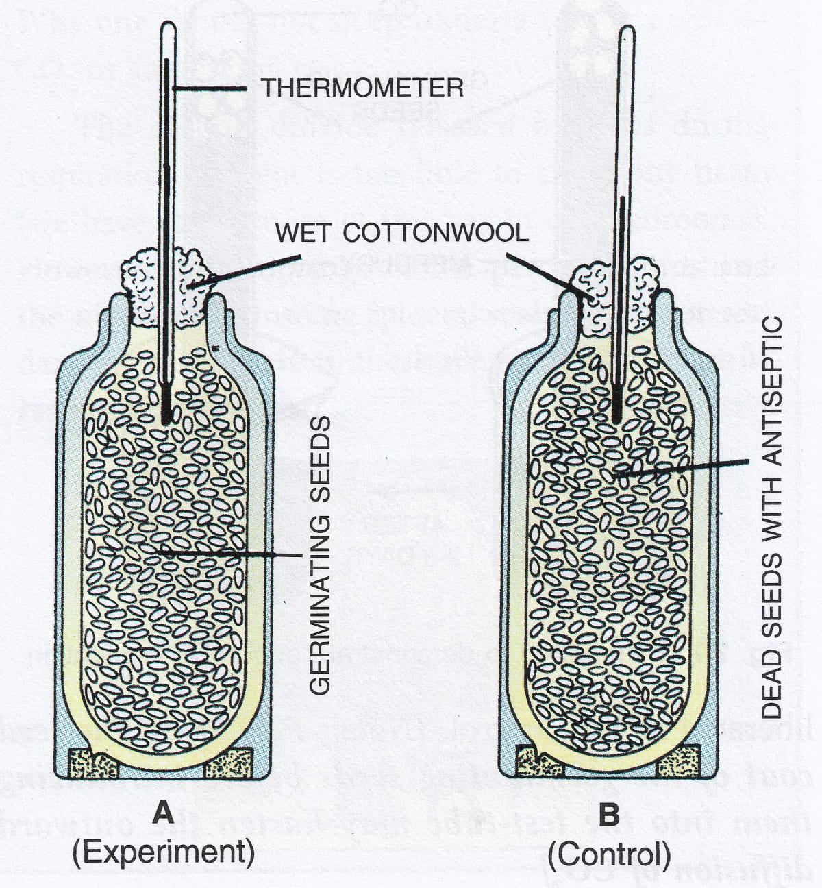 Experiment demonstrating the fact that germinating seeds produce heat. Respiration in Plants, Concise Biology Solutions ICSE Class 9.