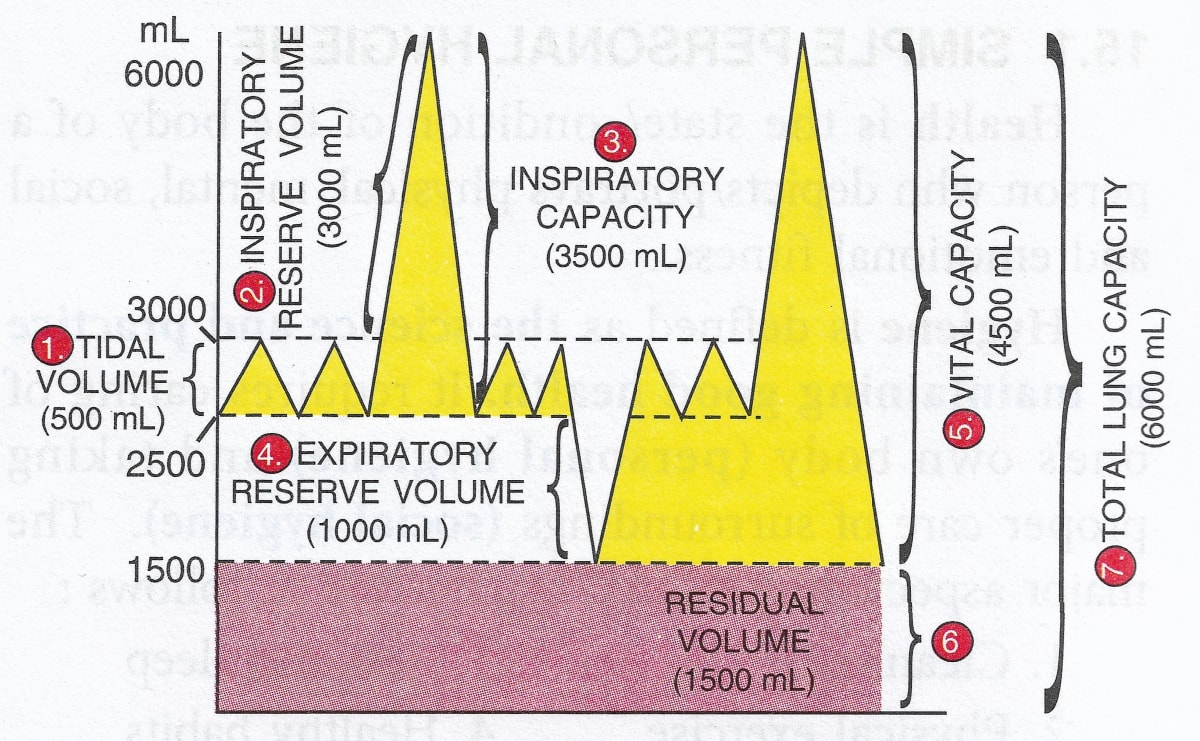 The volume of air in the lungs and the rate at which it is exchanged during inspiration and expiration was measured. The diagram shows a group of the lung volumes and capacities. Respiratory System, Concise Biology Selina Solutions ICSE Class 9.