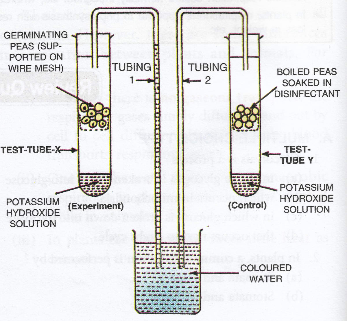 What is the purpose of keeping potassium hydroxide solution in the test tubes X and Y? Why has the coloured water risen in tubing 1? Respiration in Plants, Concise Biology Solutions ICSE Class 9.