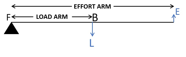 Draw a diagram of a lever which is always used as a force multiplier. How is the effort arm related to the load arm in such a lever? Machines, Concise Physics Class 10 Solutions.