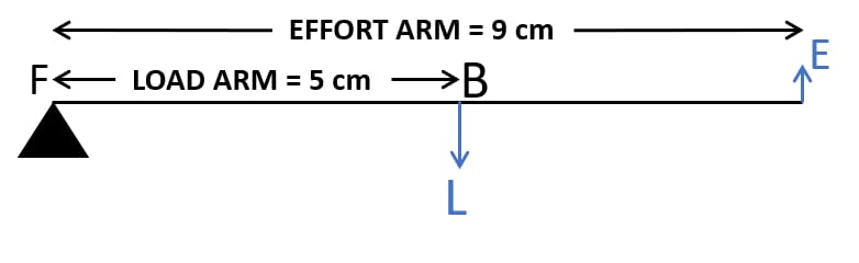 A lever of length 9 cm has its load arm 5 cm long and the effort arm is 9 cm long. Draw diagram of the lever showing the position of fulcrum F and directions of both the load L and effort E. To which class does it belong? What is the mechanical advantage and velocity ratio? Machines, Concise Physics Class 10 Solutions.