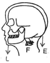 The action of nodding of the head is a Class I lever. Machines, Concise Physics Class 10 Solutions.