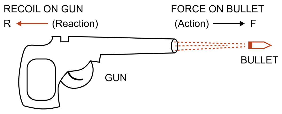 Name and state the action and reaction in firing a bullet from a gun. Laws of Motion, Concise Physics Solutions ICSE Class 9.