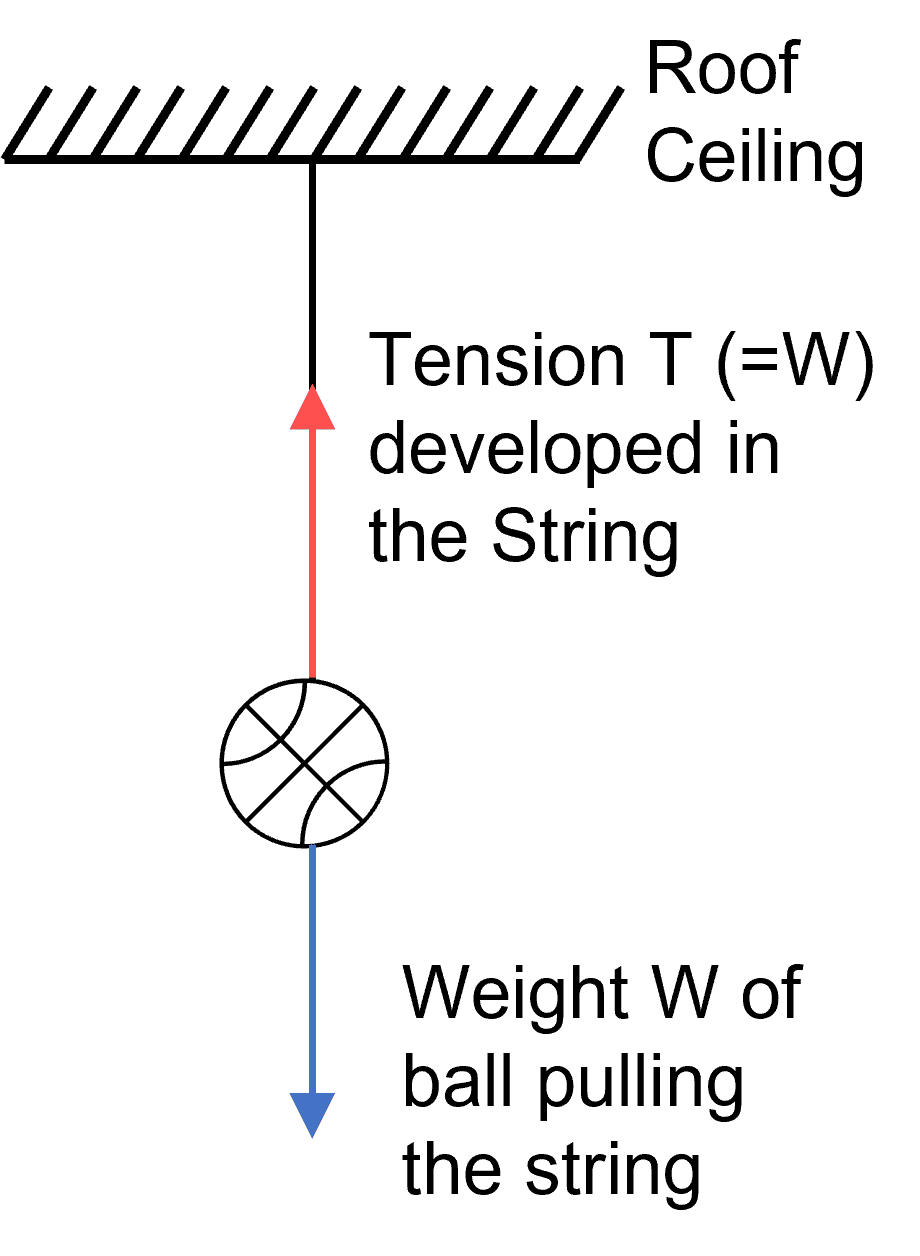 A ball is hanging by a string from the ceiling of the roof. Draw a neat labelled diagram showing the forces acting on the ball and the string. Laws of Motion, Concise Physics Solutions ICSE Class 9.