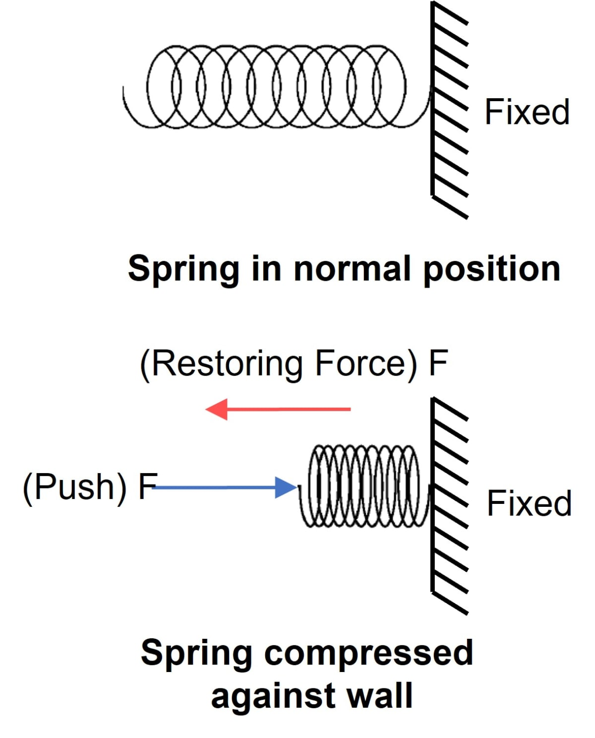 A spring is compressed against a rigid wall. Draw a neat labelled diagram showing the forces acting on the spring. Laws of Motion, Concise Physics Solutions ICSE Class 9.