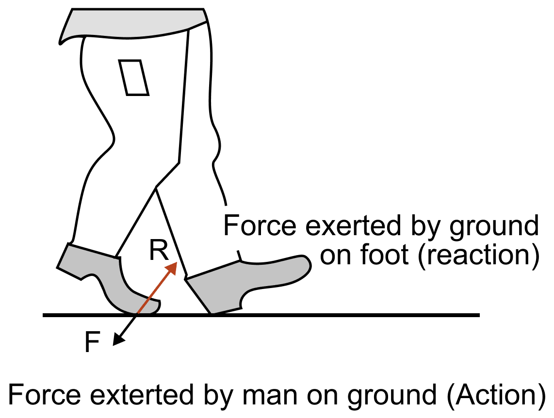 Name and state the action and reaction force when a person is walking on the floor. Laws of Motion, Concise Physics Solutions ICSE Class 9.