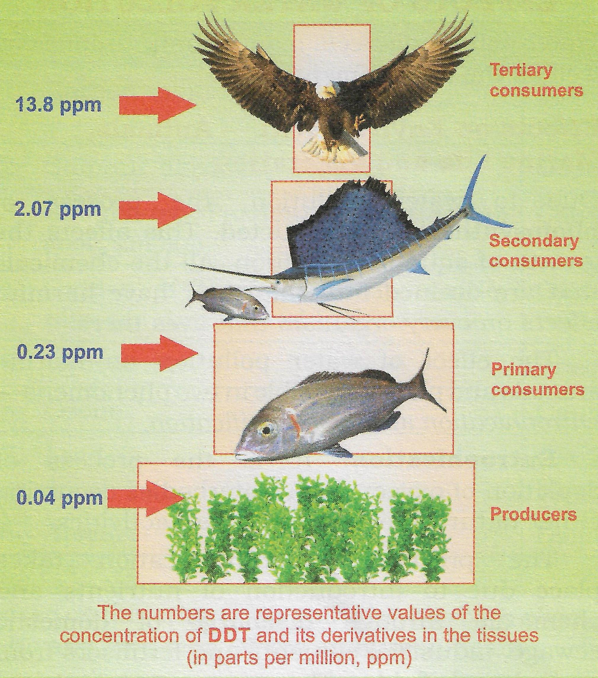 With the help of a well labelled diagram explain how the accumulation of toxic substances increases as we move up the food chain. Effects of Pollution, Total Geography Solutions ICSE Class 9.