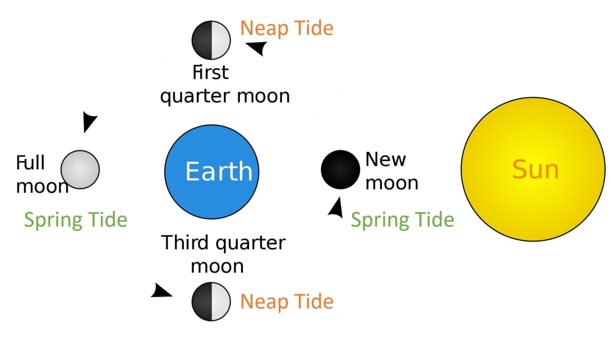 Draw a well labelled diagram showing the formation of spring and neap tides. Hydrosphere, Total Geography Solutions ICSE Class 9.